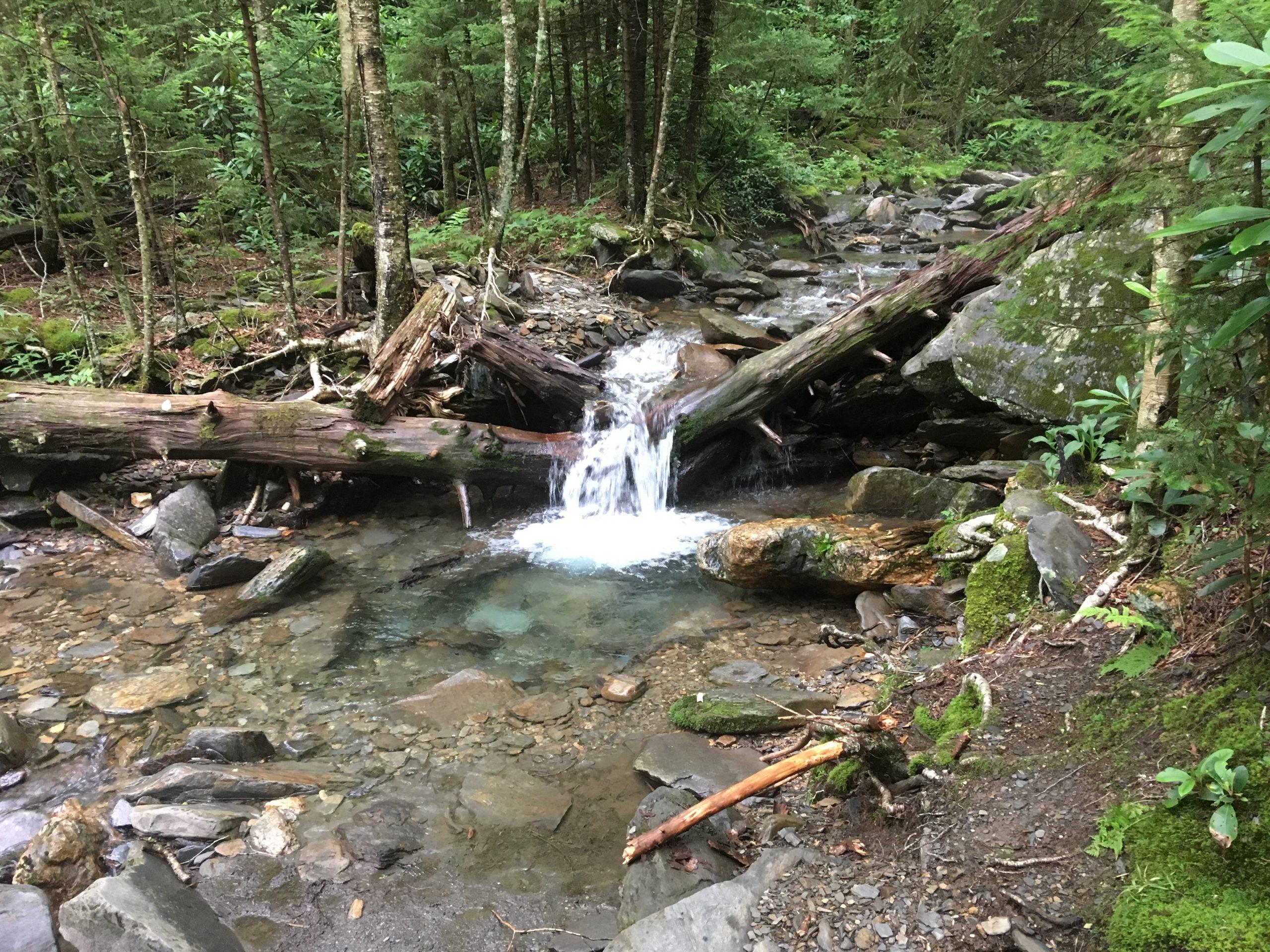 Log-jam on a Smoky Mtn Creek